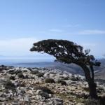 Όρος Κόχυλας
